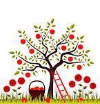 vector apple tree, basket of apples and flowers, Adobe Illustrator 8 format