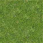 Seamless Tileable Texture of Green Grass.