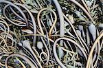 Pile of Bull Kelp seaweed washed up on beach on Rialto Beach, USA