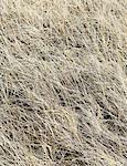 Field of coastal sea grasses, Ocean Park