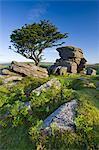 Summer morning on a rocky outcrop near Saddle Tor in Dartmoor National Park, Devon, England, United Kingdom, Europe