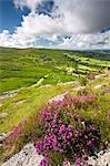 Overlooking Bonehill Rocks from Bell Tor, Dartmoor National Park, Devon, England, United Kingdom, Europe