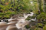 River Plym running through Dewerstone Wood in Dartmoor, Devon, England, United Kingdom, Europe