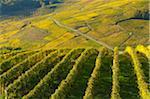 vineyards Chäteau Chalon Jura France