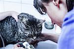 Vet treating domestic cat