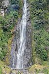 Thunder Creek falls, Haast Pass, Mount Aspiring National Park, South Island, new Zealand