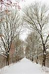 Avenue of trees in winter