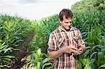 Farmer standing in field of crops using smartphone