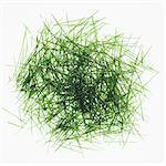 Pile of organic wheatgrass on a white background
