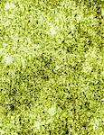 Sheet of organic sushi nori seaweed
