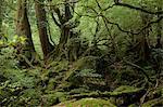 Yakushima Island, Kagoshima Prefecture