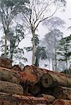 Rainforest timber logs, Sabah, Borneo