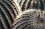Cactus in the garden of the Villa Majorelle, Marrakech, Morocco, North Africa, Africa