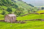 Field barn below Kisdon Hill near Angram in Swaledale, Yorkshire Dales, Yorkshire, England, United Kingdom, Europe