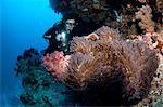 Diver illuminates anemone.