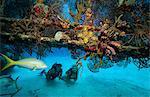 Scuba divers on shipwreck.