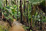 Pathway through Rainforest of Vallee de Mai Nature Preserve, Praslin, Seychelles