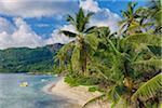 Anse Forbans Shoreline with Palm Trees, Mahe, Seychelles