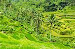 Balinese Rice Terraces