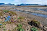 Riverbed near Doubtful village, Wrangel Island, UNESCO World Heritage Site, Chuckchi Sea, Chukotka, Russian Far East, Russia, Eurasia