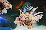 Funny tropical fish in sea.