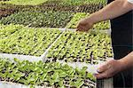 Man holding a tray of lettuce seedlings