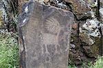 Native Anerican Indians Antelope Deer Animals Petrogylph on Rock Artwork at Horsethief Lake Washington