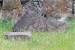 Native Anerican Indians Mythical Animals Petrogylph on Rock Artwork at Horsethief Lake Washington