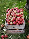 Apples in wooden box, Varmdo, Uppland, Sweden