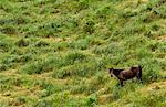 Descending horse in landscape, North Island, New Zealand