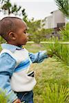 Boy Examining Pine Tree Branch, Maryland, USA