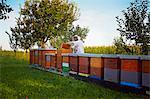 Beekeeper Working In Garden, Croatia, Europe