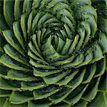 Close up of spiral leaf pattern