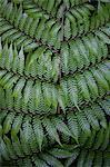 Close up of fern leaf patterns