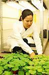 Female scientist comparing plant samples in lab