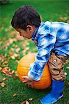 Male toddler in the garden picking up pumpkin