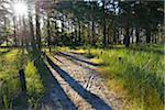 Sandy Path with Sun, Summer, Darsser Ort, Prerow, Darss, Fischland-Darss-Zingst, Baltic Sea, Western Pomerania, Germany