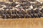 Gnu Herd
