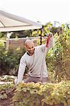Mature man gardening at yard