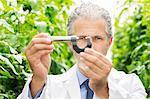 Scientist holding caliper in greenhouse