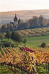 Vineyards in autumn, German Wine Route, Pfalz, Rhineland-Palatinate, Germany, Europe