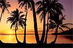 Palm trees on beach, Bora Bora, Tahiti