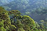 Atlantic rainforest, Serra dos Orgaos National Park, Brazil