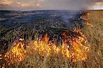 Brush fire during dry season, Okavango Delta, Botswana