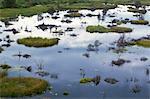 Okavango Delta, Chobe National Park, Botswana, Africa
