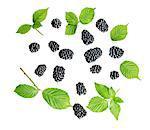 Assorted Blackberries and leaves