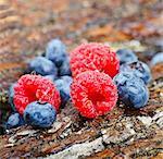 Raspberries and blueberries on tree bark