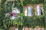 Overgrown facade of building, Sweden