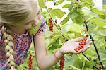 Girl looking at berries in garden