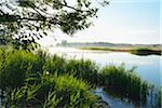 Prerowstrom on Misty Morning, Prerow, Fischland-Darss-Zingst, Mecklenburg-Western Pomerania, Germany